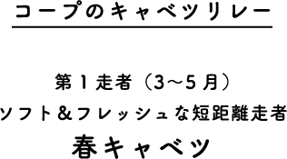 コープのキャベツリレー 第1走者(3~5月)ソフト&フレッシュな短距離走者 春キャベツ