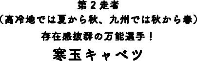 第2走者(高冷地では夏から秋、九州では秋から春)存在感抜群の万能選手 寒玉キャベツ