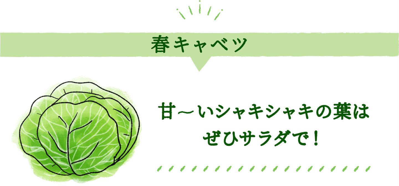 春キャベツ 甘~いシャキシャキの葉はぜひサラダで!
